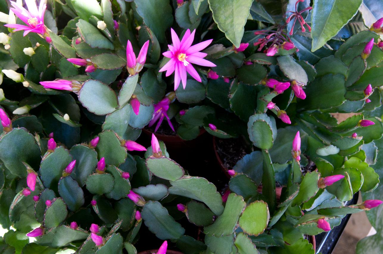 Plantas exterior aproveche nuestra campaa de kokedamas - Plantas de exterior ...